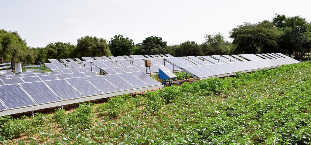 solar panels sit in a field next to growing agricultural crops